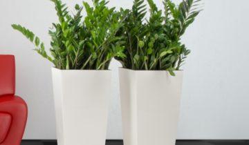 Rośliny doniczkowe dla zabieganych i opornych